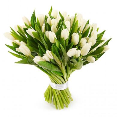 Тридцать один белый тюльпан